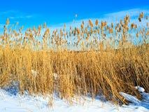 Sucha płocha na śniegu Zdjęcie Stock