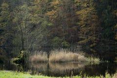 Sucha płocha w rzece Fotografia Stock