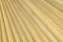 Sucha palma opuszcza teksturę Zdjęcie Stock