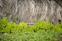 Sucha palma opuszcza w Agonda, Goa, India Obrazy Stock