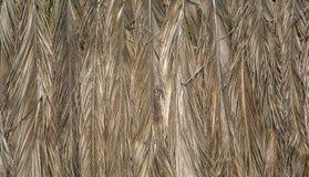 Sucha palma opuszcza w Agonda, Goa, India Obrazy Royalty Free