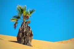 Sucha palma w piasek diunie namib desert obraz royalty free