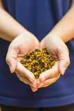 Sucha rumianek herbata na kobiety ręce Obraz Stock