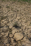 sucha suszy ziemia Zdjęcie Royalty Free