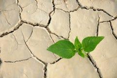 sucha tło roślina Fotografia Stock
