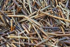 sucha tło trawa Zdjęcia Stock