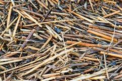 sucha tło trawa Obraz Stock