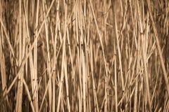 sucha tło trzcina Fotografia Stock