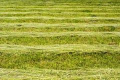 Sucha trawa na łące obrazy stock