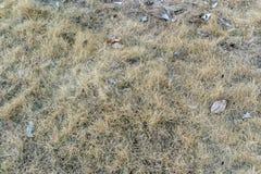 Sucha trawa na teksturze i tle Obrazy Stock