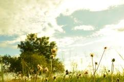 Sucha trawa przeciw niebu Zdjęcia Royalty Free