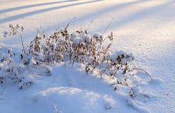 Sucha trawa przy zimą obrazy royalty free