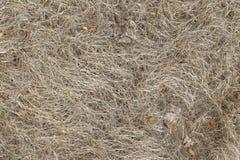 Sucha trawa, tło z Suchym liściem Obraz Stock