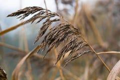 Sucha trawa, tło Obrazy Stock