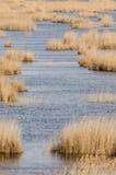 Sucha trawa w jeziorze Obraz Stock