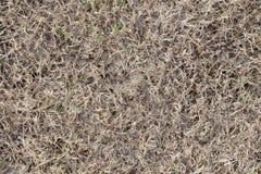 Sucha trawa w ogródzie Zdjęcia Stock