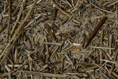 Sucha trawa w piasku zaświecał wiosny słońcem obraz royalty free