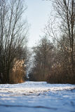 Sucha trawa w tle śnieżny pole Fotografia Royalty Free