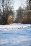 Sucha trawa w tle śnieżny pole Zdjęcia Royalty Free