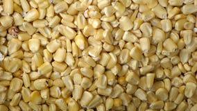 Sucha złota kukurudza groszkuje tekstury tło Zdjęcie Royalty Free