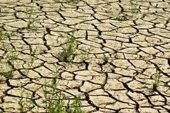 sucha ziemia Zdjęcia Stock