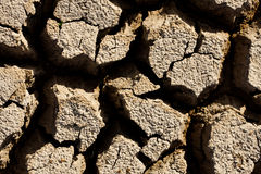 sucha ziemska tekstura Fotografia Stock