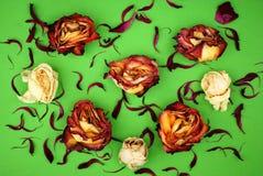 Suche colorfull róże na zieleni Obrazy Royalty Free