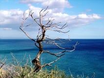suche drzewo zdjęcia stock