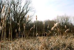suche krajobrazu, Obrazy Stock
