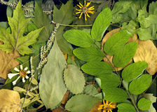 suche liście jesienią Zdjęcia Stock