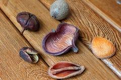 Suche owoc i kwiaty Obraz Stock