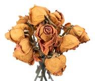Suche róże Obraz Royalty Free