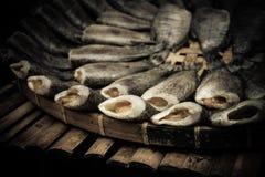suche ryba Obraz Stock
