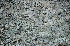 Suche rzeczne algi i skorupy na piasku Zdjęcie Stock