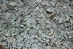 Suche rzeczne algi i skorupy na piasku Obraz Stock