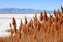 Suche trawy Wielki Salt Lake w Utah Obraz Royalty Free