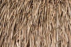 Suchego Nypa palmowy liść Zdjęcie Stock