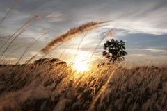 Suchej trawy łąka z zmierzchem obrazy royalty free