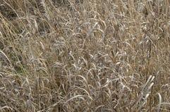 Suchej trawy jesień Zdjęcia Stock