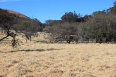 Suchej trawy otwarty pole z niebieskimi niebami Obrazy Royalty Free