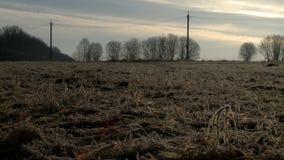 Suchej trawy pola widok w wieczór zdjęcie wideo