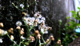 Suchej trawy roślina Obrazy Royalty Free