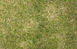 Suchej trawy tło Obrazy Stock