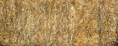Suchej trawy tło Fotografia Stock