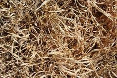 Suchej trawy tło Zdjęcie Stock