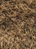 Suchej trawy wzór Zdjęcie Royalty Free