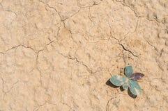 Suchej ziemi i piaska zbliżenia tekstura Obraz Royalty Free