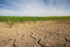 Suchej ziemi ryż gospodarstwo rolne Fotografia Stock