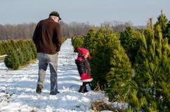 Suchen nach dem perfekten Weihnachtsbaum Stockfotos