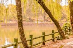 Sucheng倾斜的树  免版税图库摄影